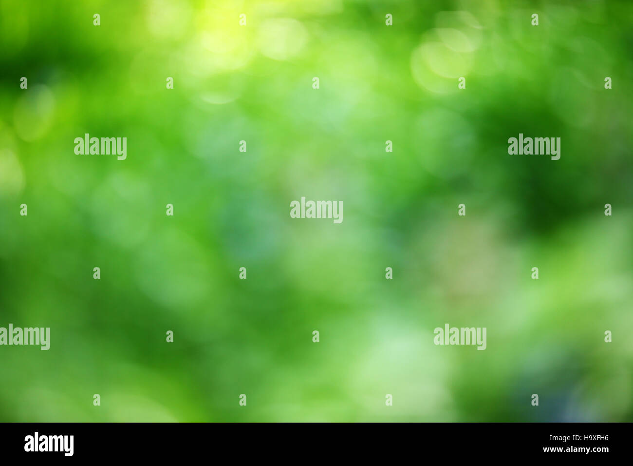 Verde Natura Sfondo Sfocato Estate Abstract Foto Immagine Stock