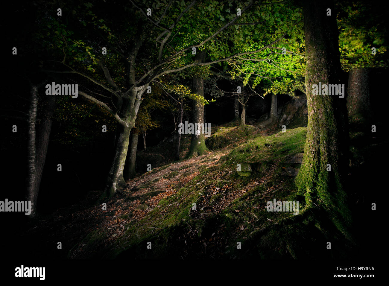 Un legno scuro di notte. Immagini Stock
