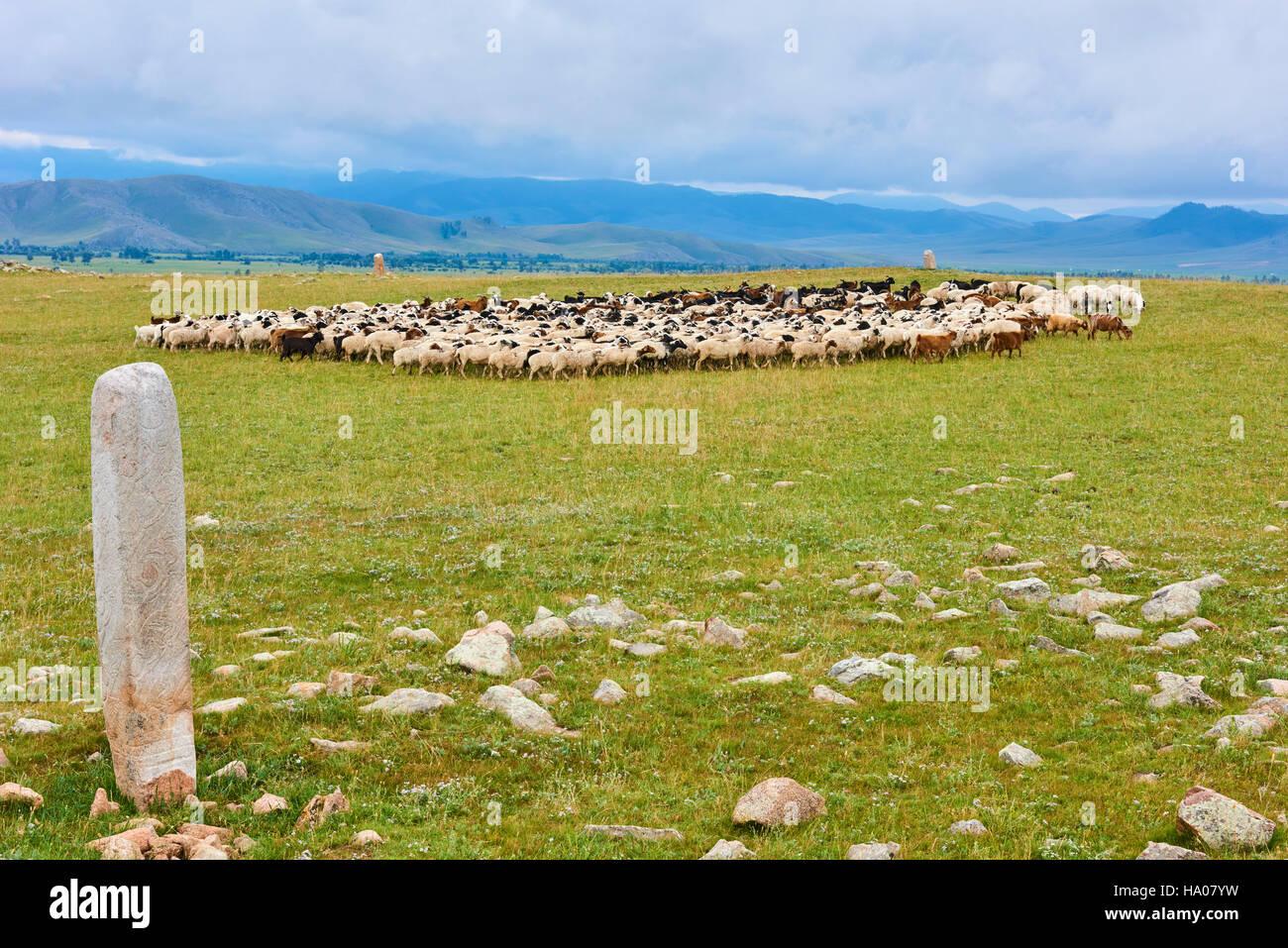 Mongolia, provincia Arkhangai, un allevamento di ovini nei pressi di un cervo pietra dell età del bronzo Immagini Stock