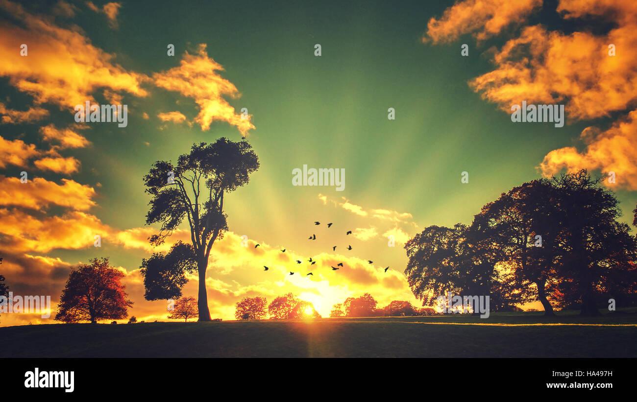 Tramonto panoramico paesaggio con alberi e uccelli in volo Immagini Stock