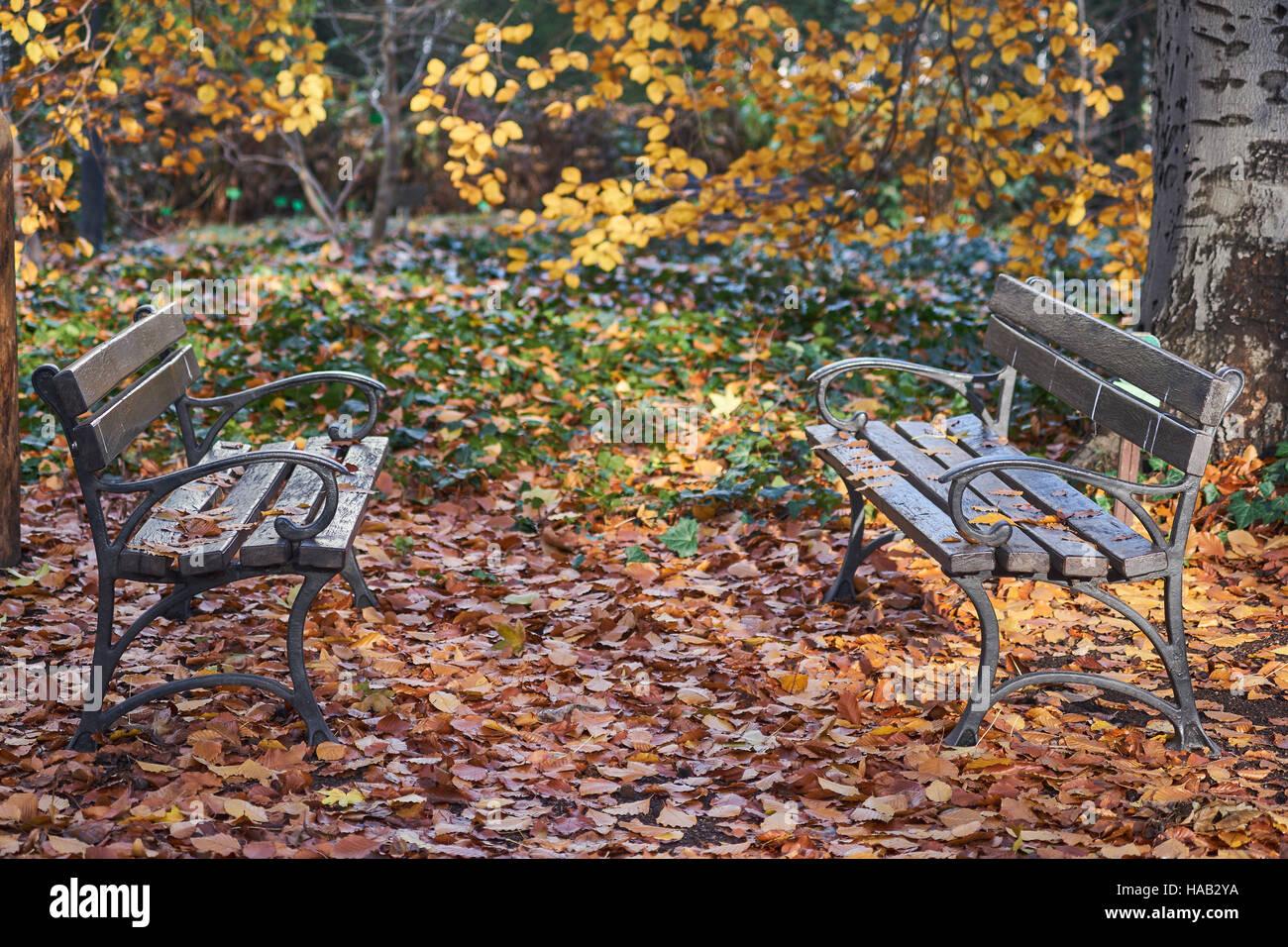 Banchi vuoti tra caduto foglie di autunno nostalgia Immagini Stock