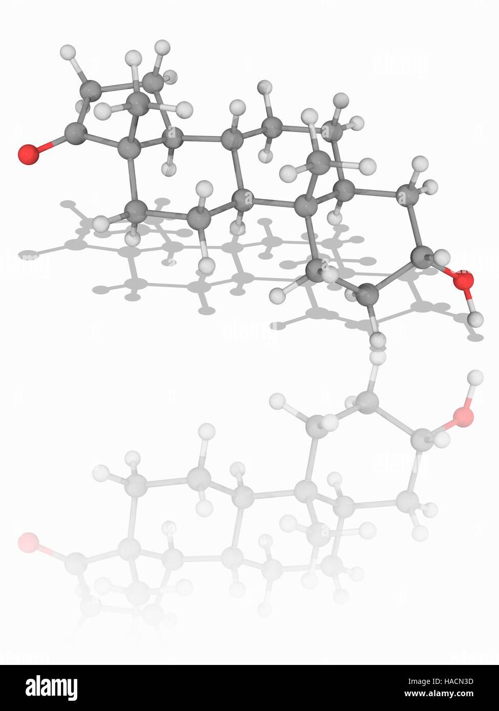 Androsterone. Il modello molecolare di ormone steroideo androsterone (C19.H30.O2), prodotta nel fegato da il metabolismo Immagini Stock