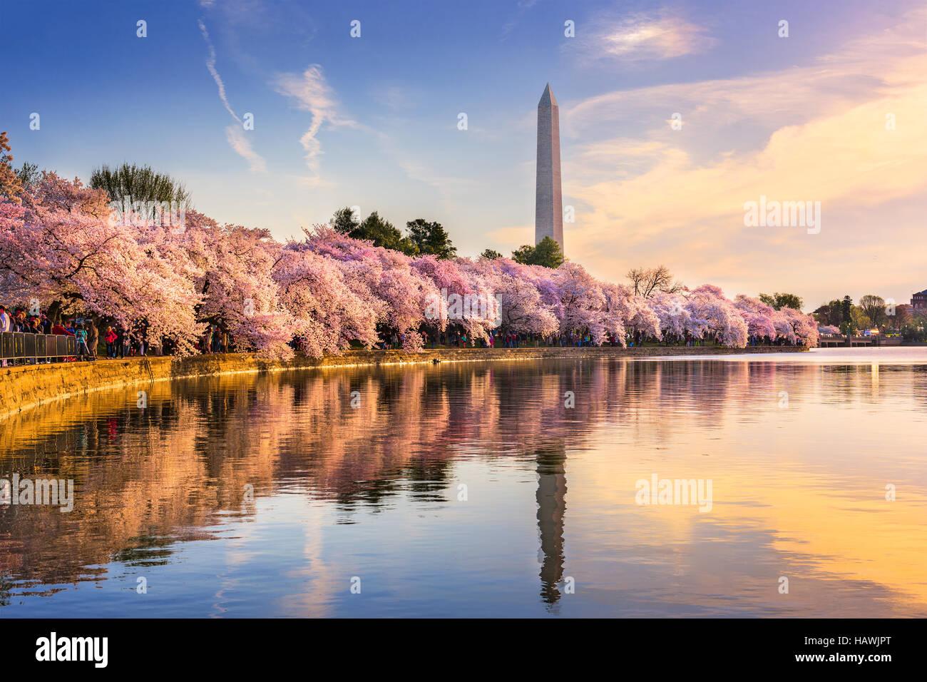 Washington DC, Stati Uniti d'America presso il bacino di marea con il Monumento a Washington nella stagione Immagini Stock