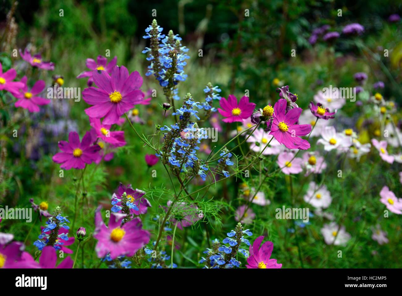 Cosmo salvia rosa blu bianco mix letto misto di visualizzazione