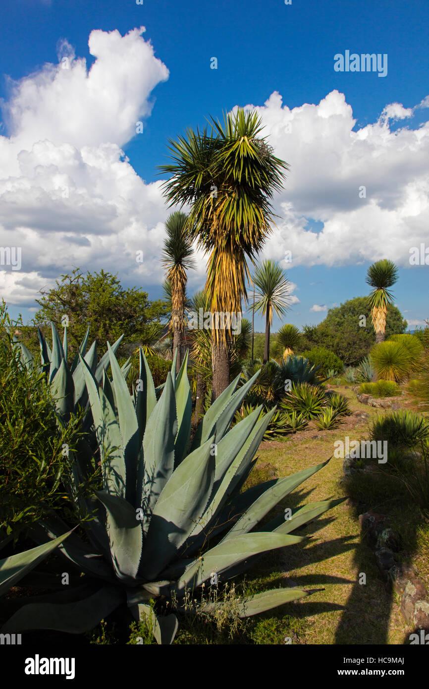 EL CHARCO DEL INGENIO è un giardino botanico con nativo piante messicano - San Miguel De Allende, Messico Foto Stock