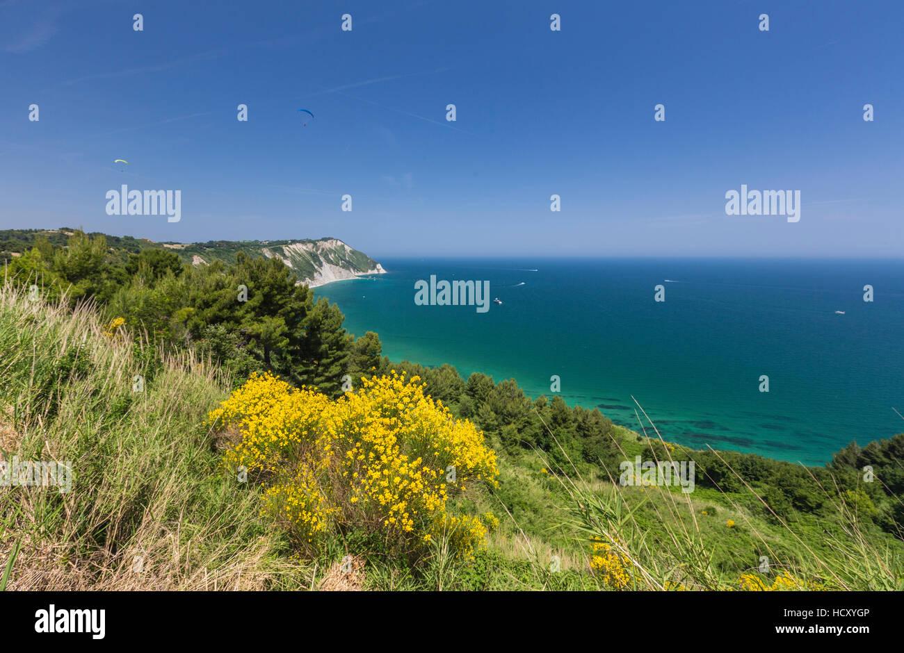Fiori di colore giallo sul promontorio che si affaccia sul mare turchese, in provincia di Ancona, di Riviera del Immagini Stock