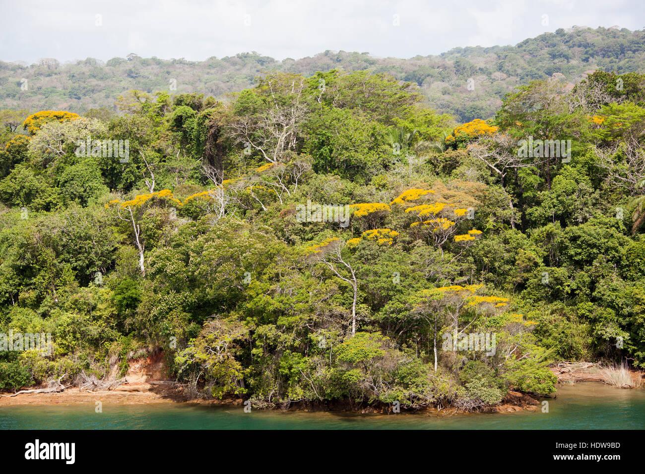 La vista della giungla su una riva del canal (Panama). Immagini Stock