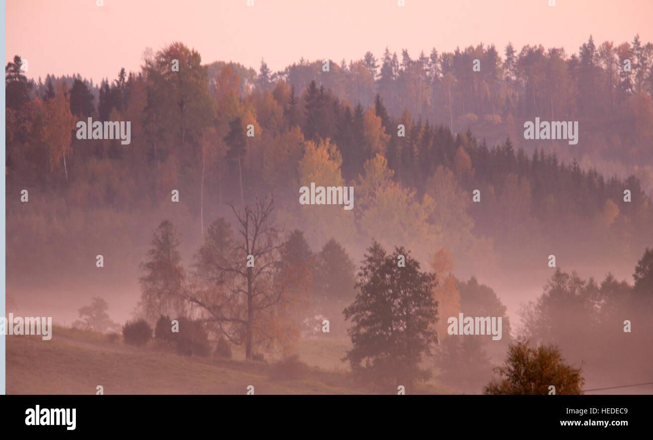 Autunno paesaggi con nebbia di mattina Immagini Stock