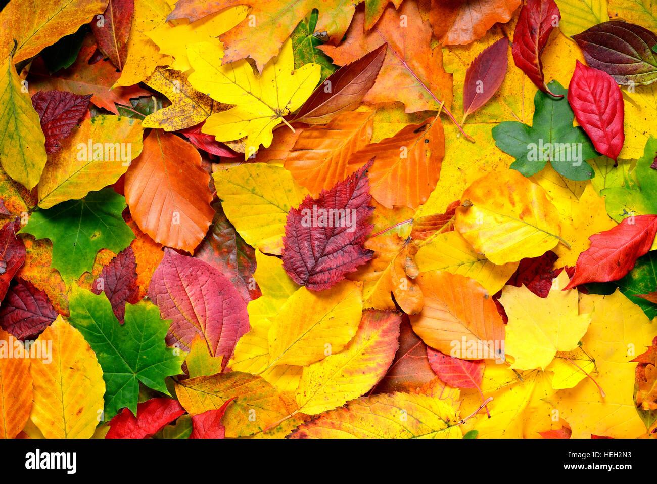 Bunte Herbstblaetter Immagini Stock