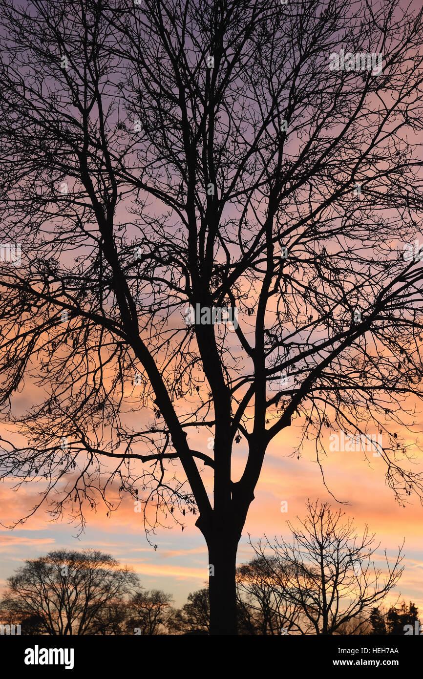 Inverno alberi in sihouette contro il sole di setting Immagini Stock