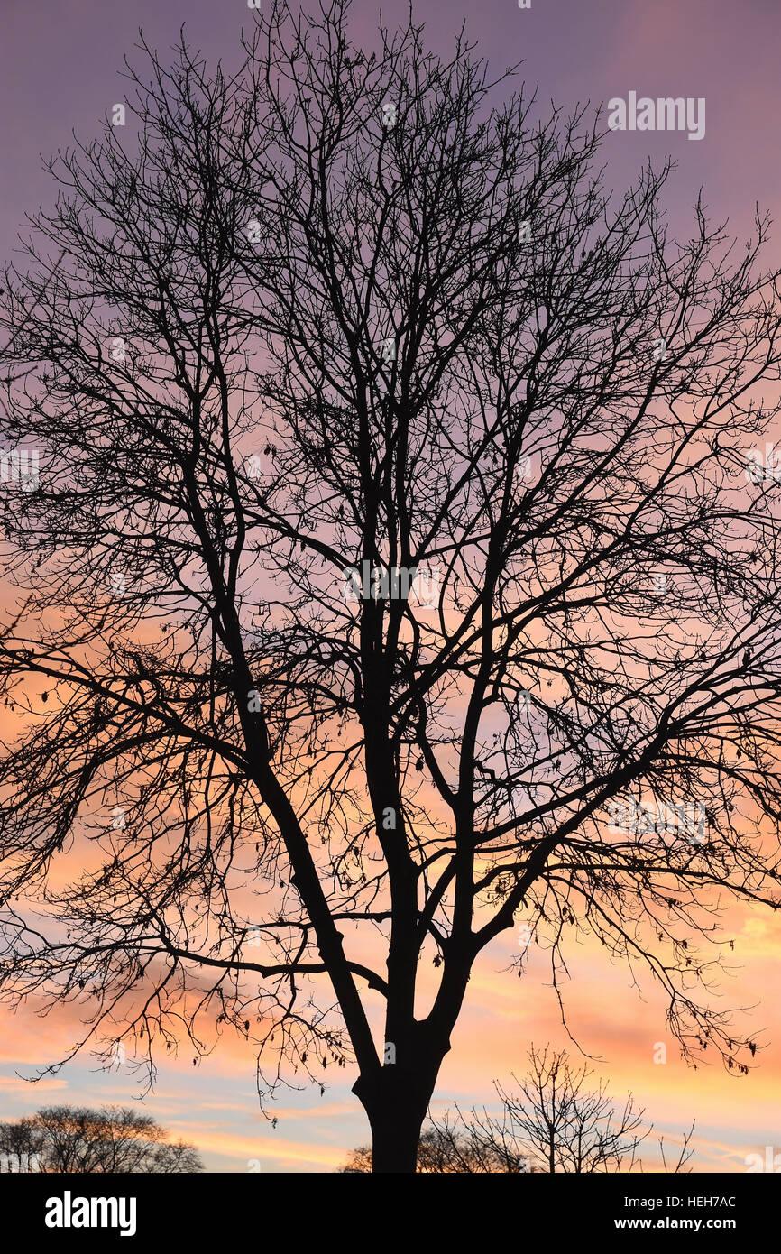 Inverno alberi in sihouette contro il sole di setting. Immagini Stock