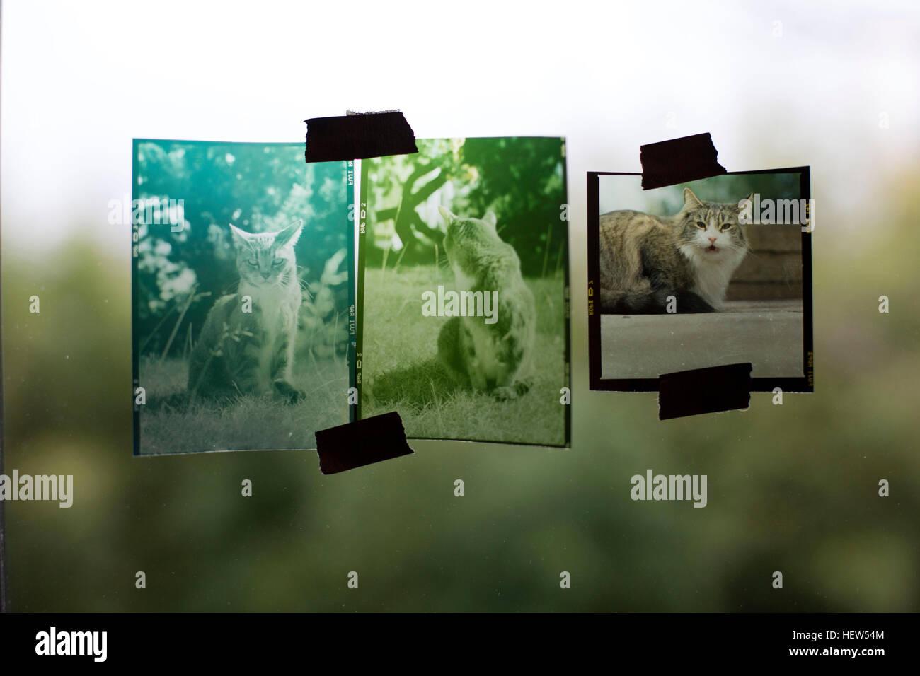 Fotografia che mostra i lucidi gatti, fissato con nastro adesivo per finestra, close-up Immagini Stock