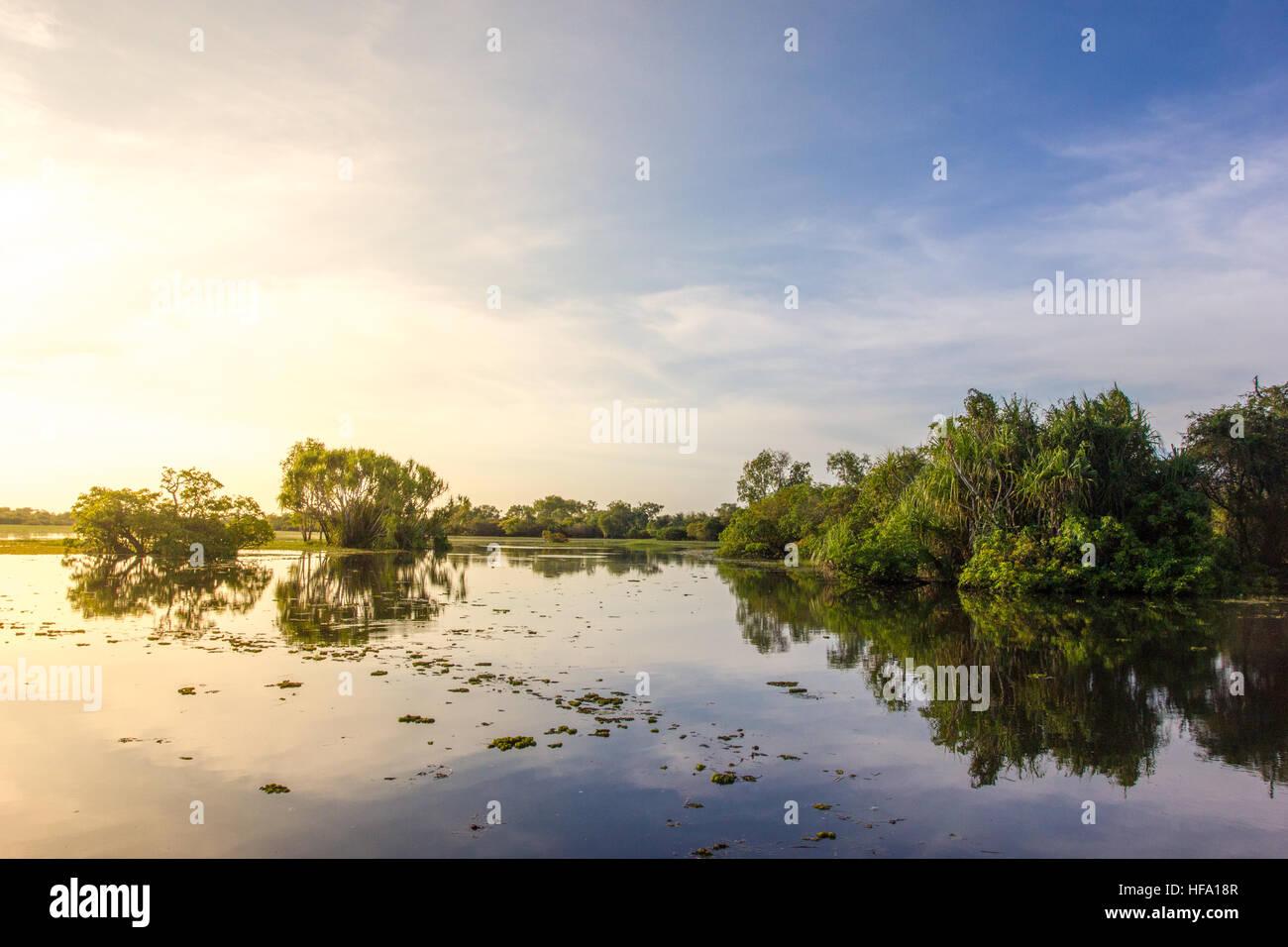 Kakadu, acqua gialla Billabong, Australia Foto Stock