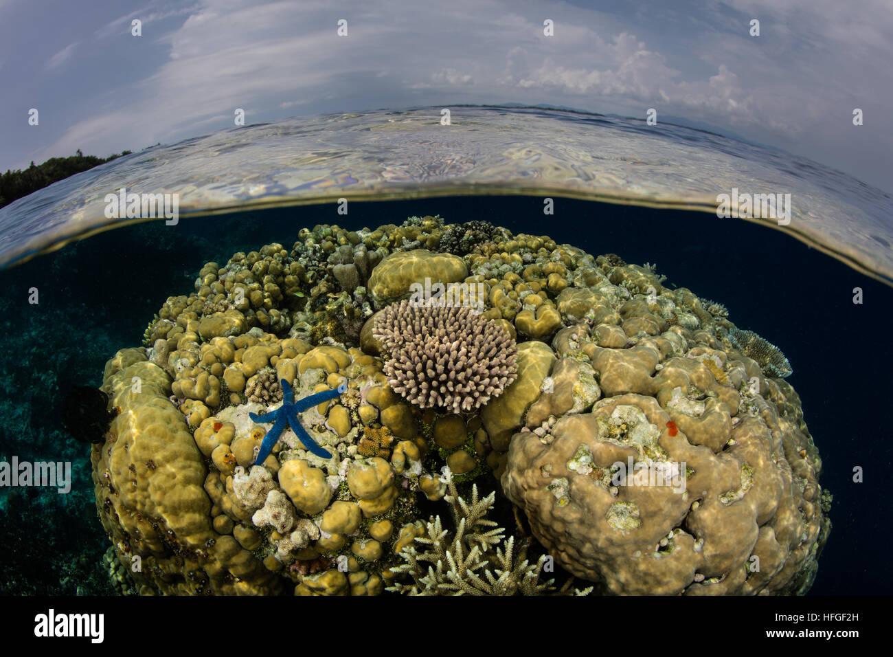 I coralli crescono in acque poco profonde nelle isole Salomone. Questa regione è nota per la sua incredibile Immagini Stock