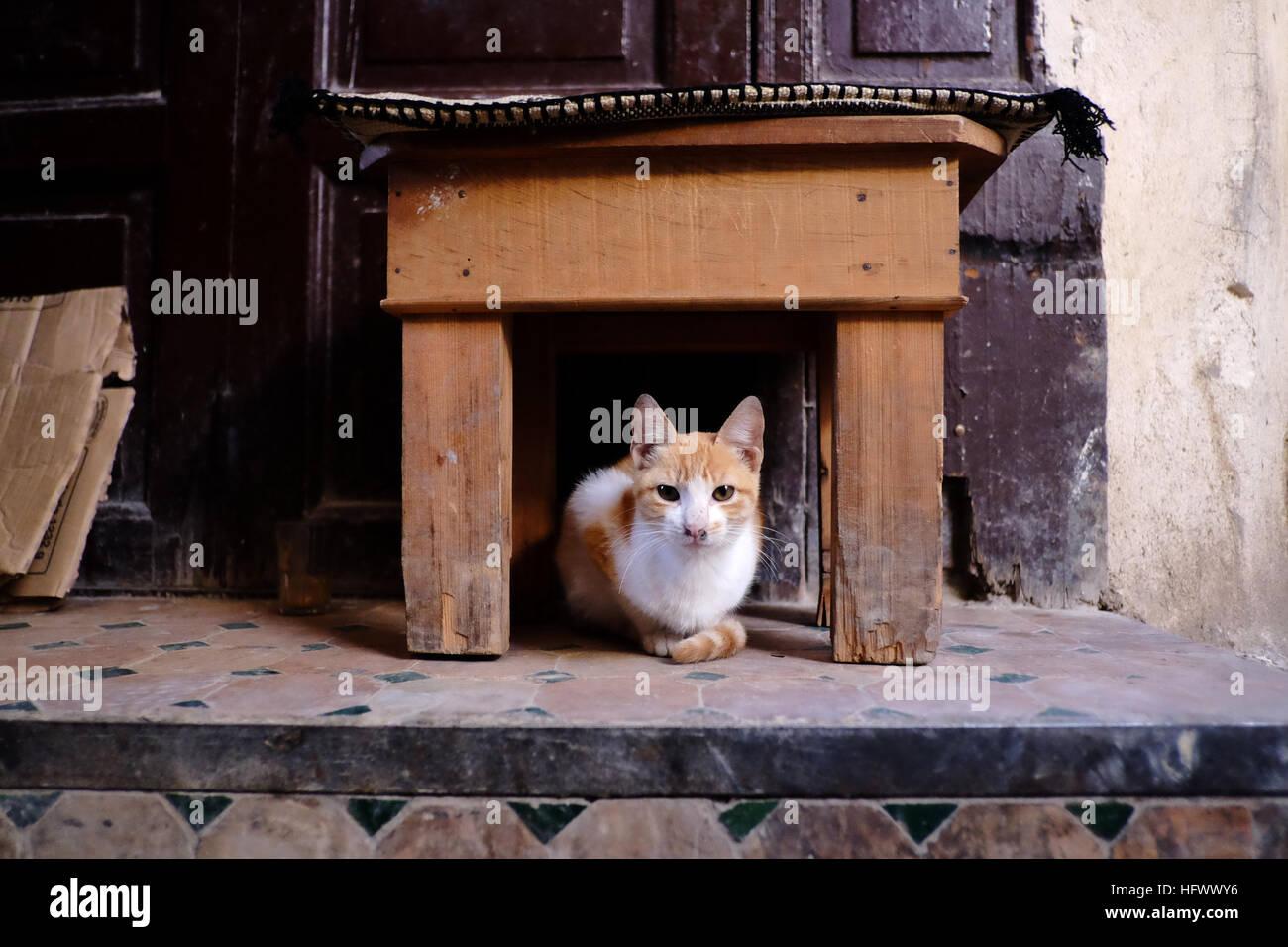 Un lo zenzero e il gatto bianco seduto sotto un sgabello in legno al