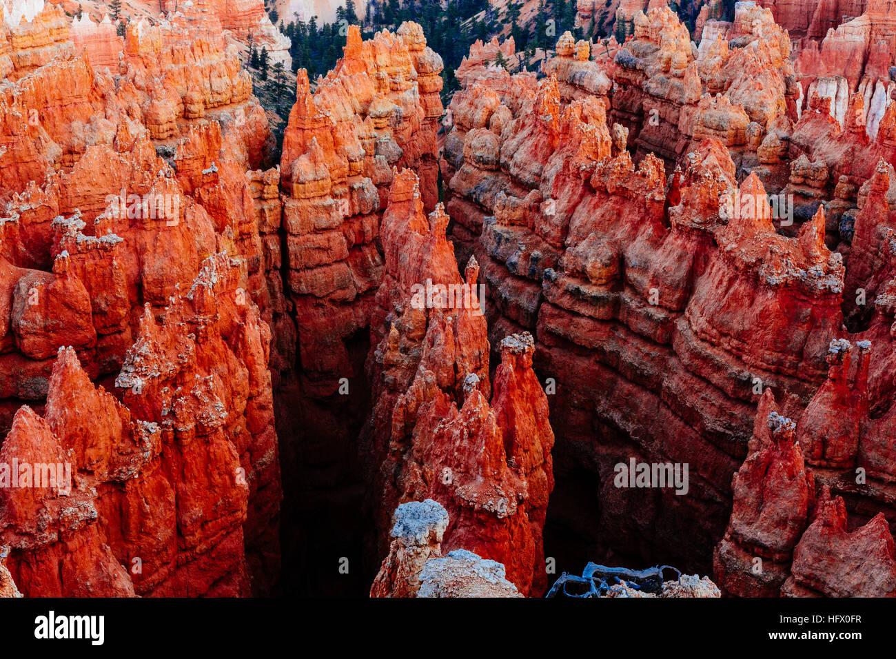 Bryce Canyon è una collezione di anfiteatri naturali da parte dell'altopiano Paunsaugunt. Bryce è un tratto distintivo Foto Stock