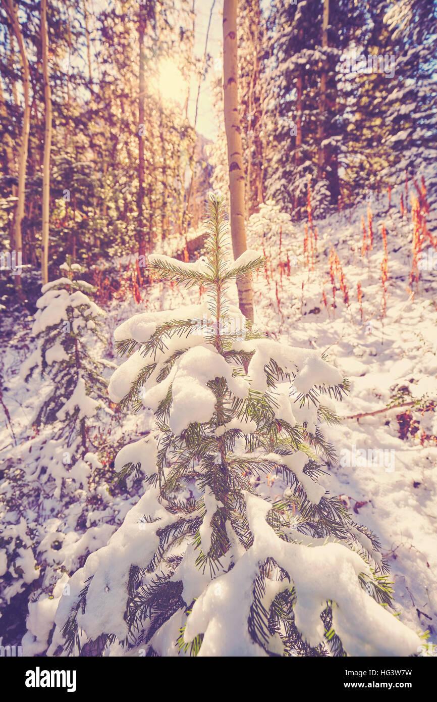 Vintage foto dai toni di una foresta invernale contro sun. Immagini Stock