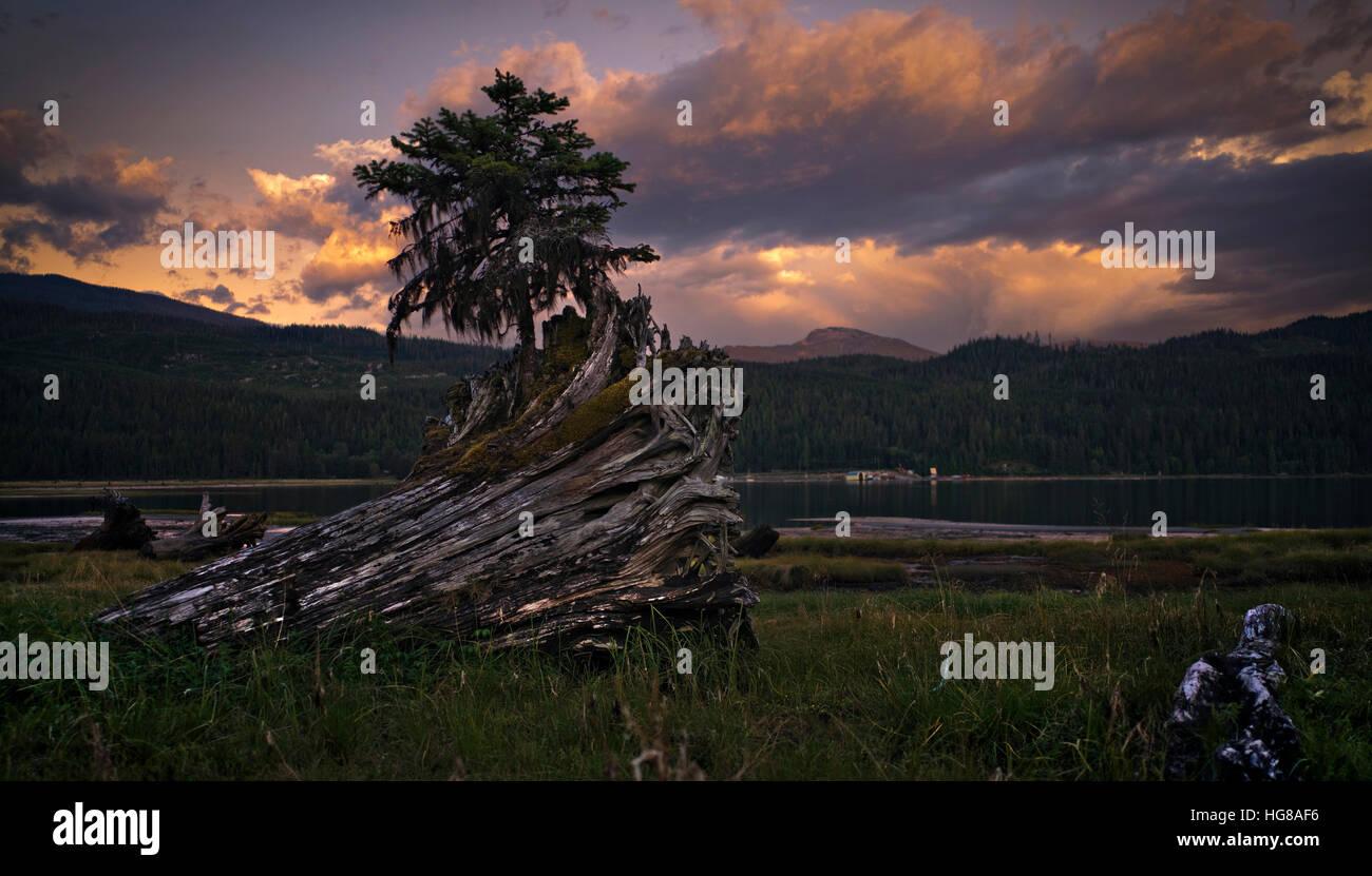 Caduto albero tronco in campo al lakeshore contro il cielo nuvoloso Immagini Stock