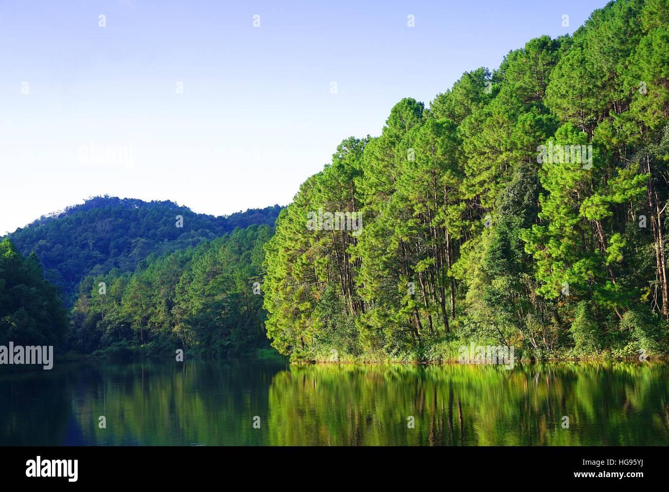 La riflessione di alberi di pino in Pang Oung Lago (Pang Tong serbatoio), Mae Hong Son , della Thailandia Immagini Stock