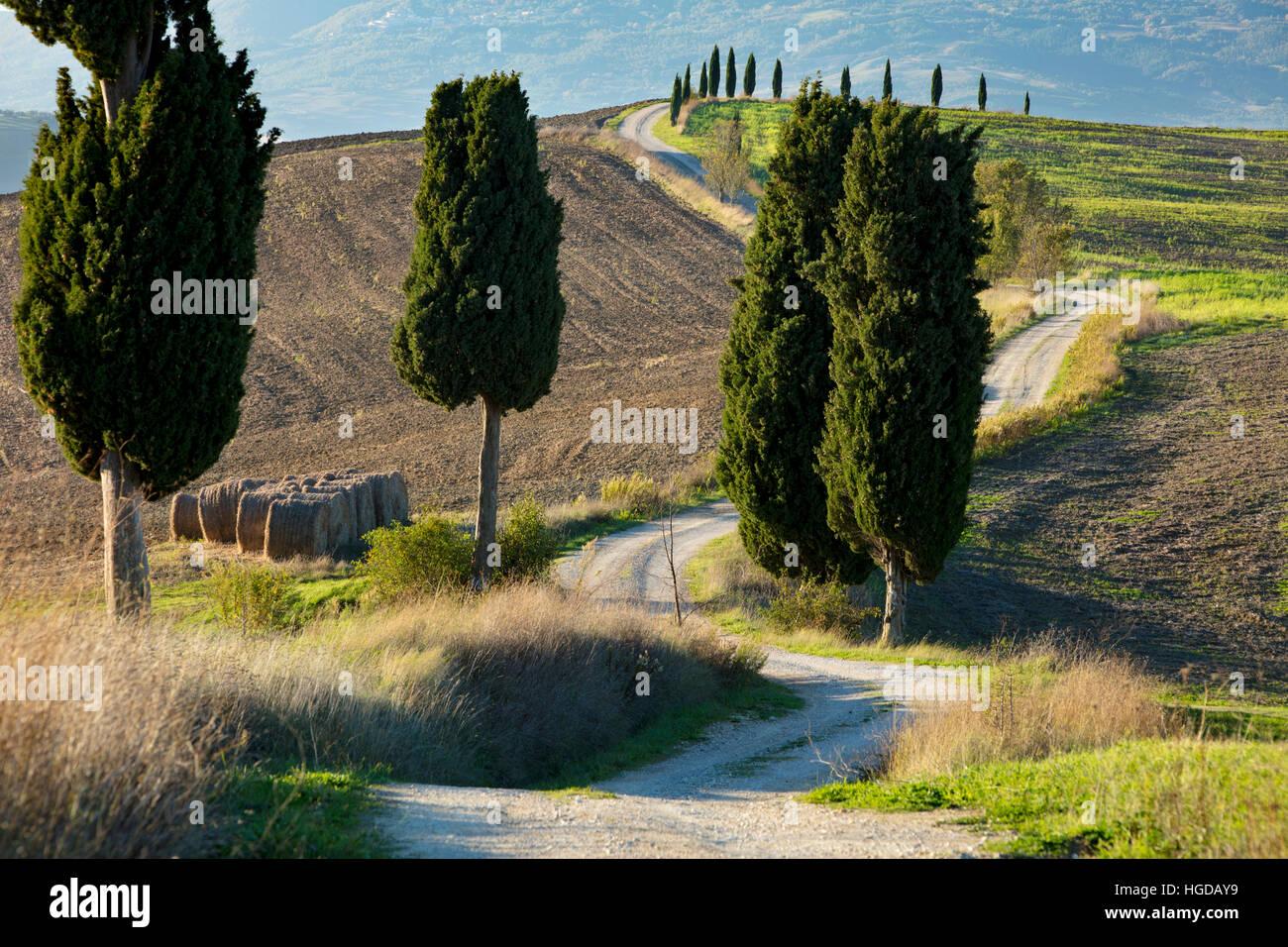 Fattoria di avvolgimento la via che conduce alla villa contea vicino a Pienza, Toscana, Italia Immagini Stock