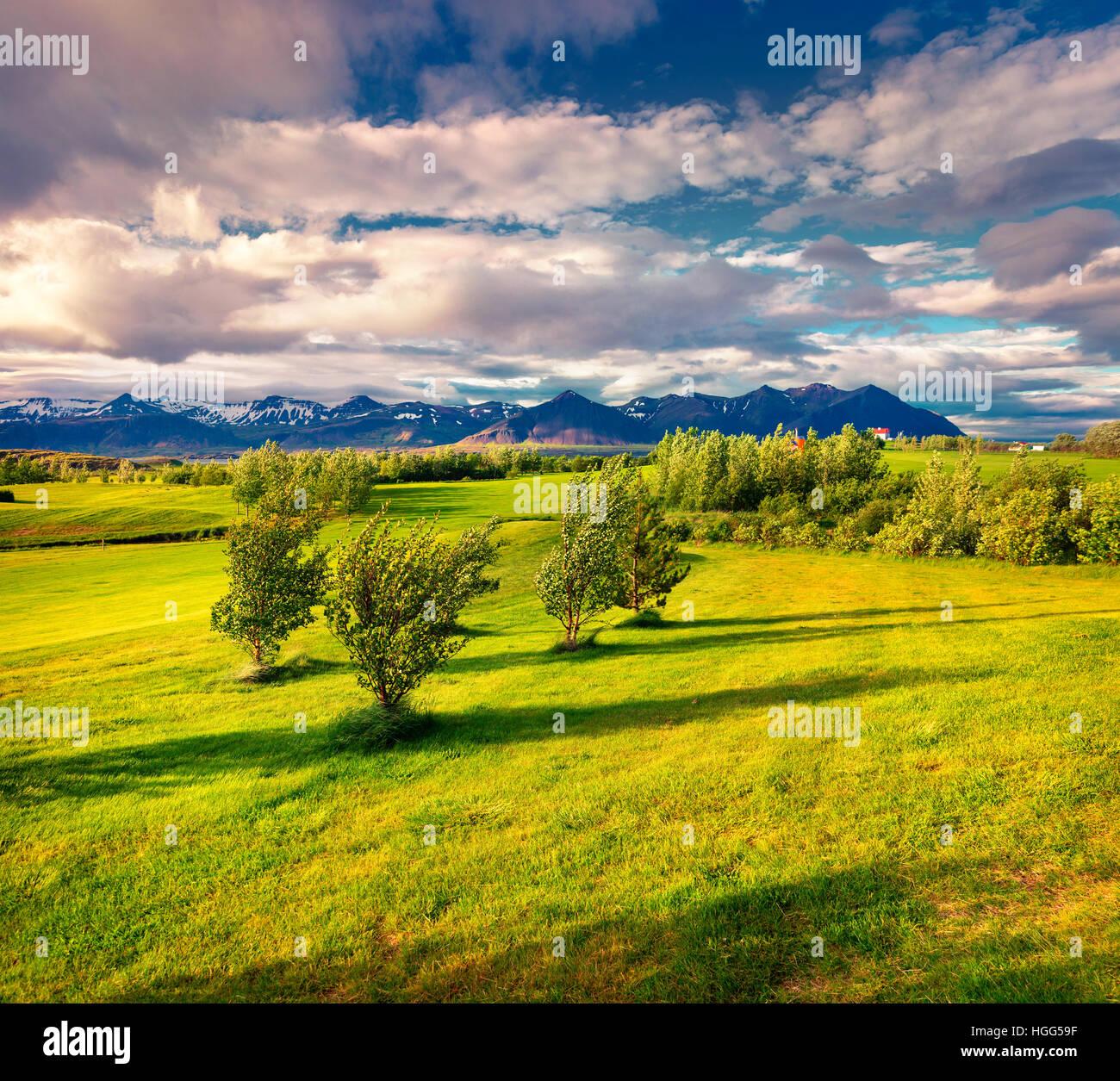 Colorato paesaggio islandese con campo di erba verde in giugno. Mattina di sole sulla costa ovest dell'Islanda, Immagini Stock