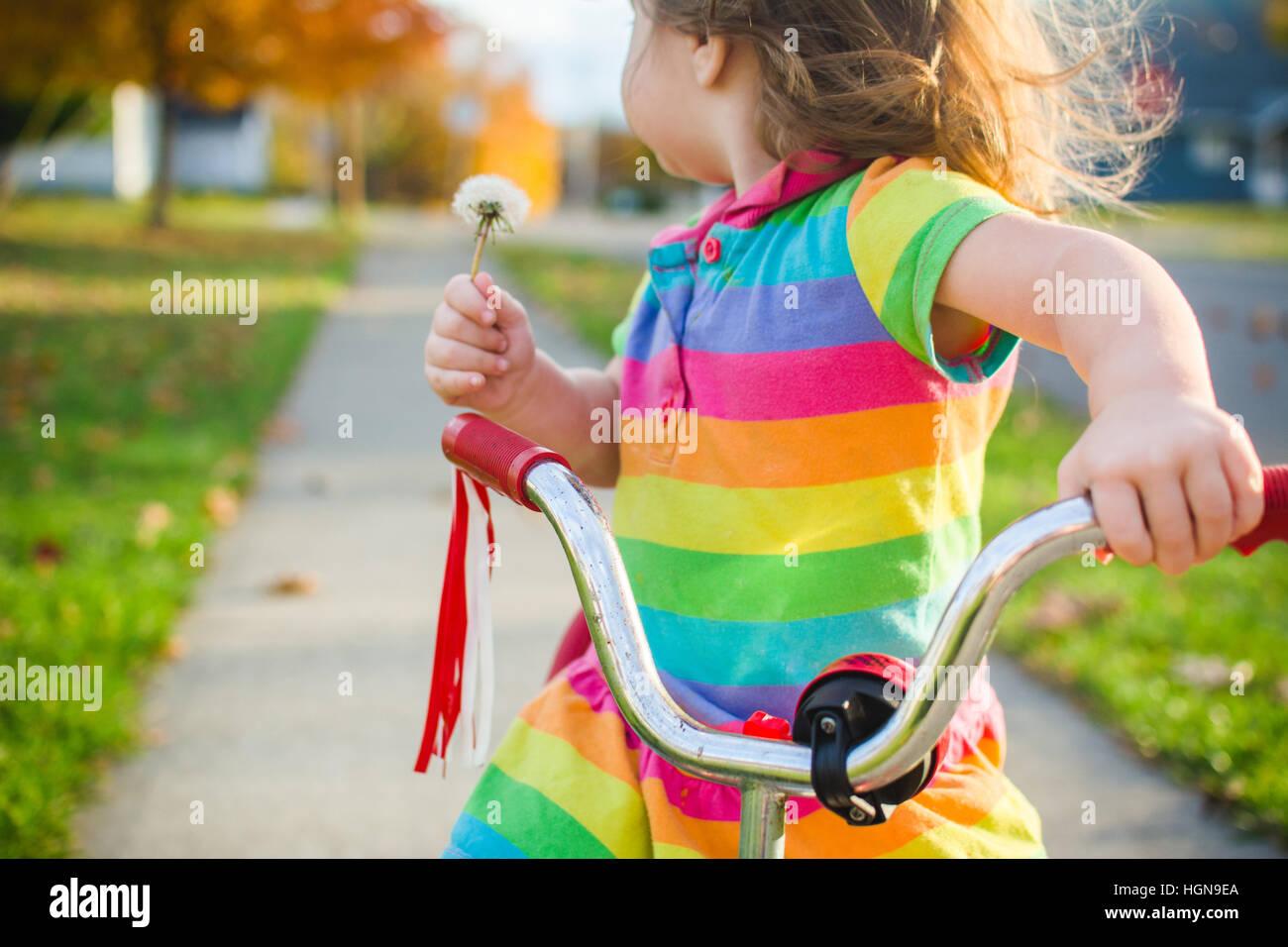 Una giovane ragazza tiene un dente di leone seduto su un triciclo. Immagini Stock