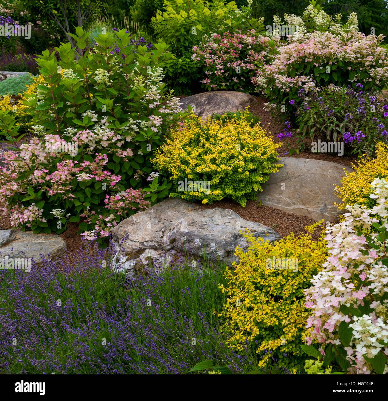 Fiori Da Giardino Roccioso giardino roccioso con piante fiorite, quebec, canada foto