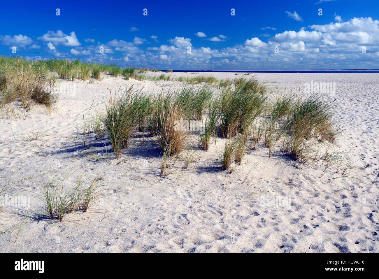 Duenen am Ellenbogen, elenco, Sylt, nordfriesische isole, Nordfriesland, Schleswig-Holstein, Germania Foto Stock