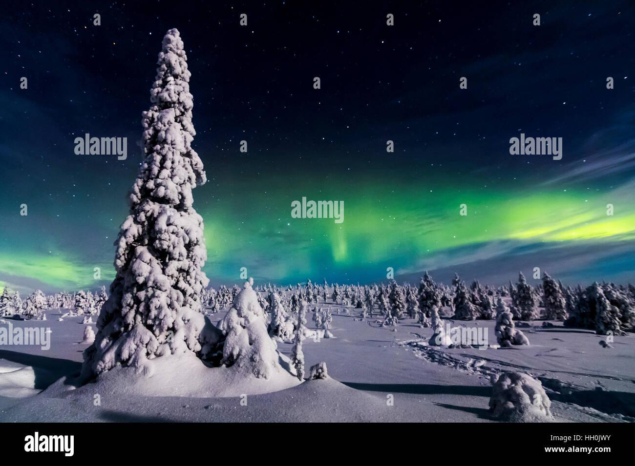 Luci del nord in riisitunturi national park, Finlandia Immagini Stock