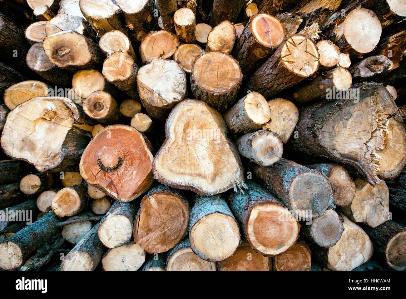 Impilati tagliare tronchi di legno in un inverno woodpile di