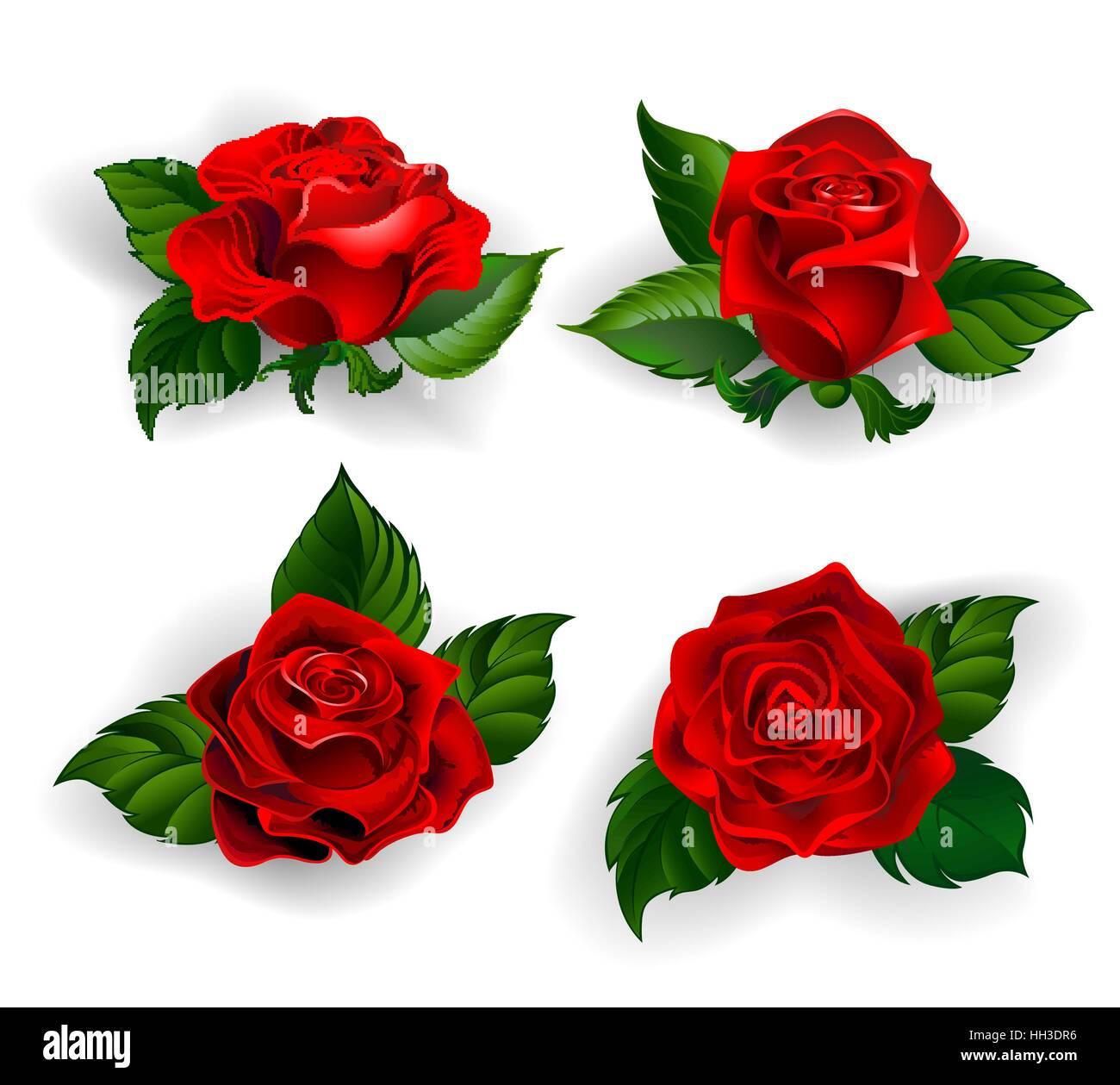 Roses Illustration Stylized Flowers Design Immagini Roses