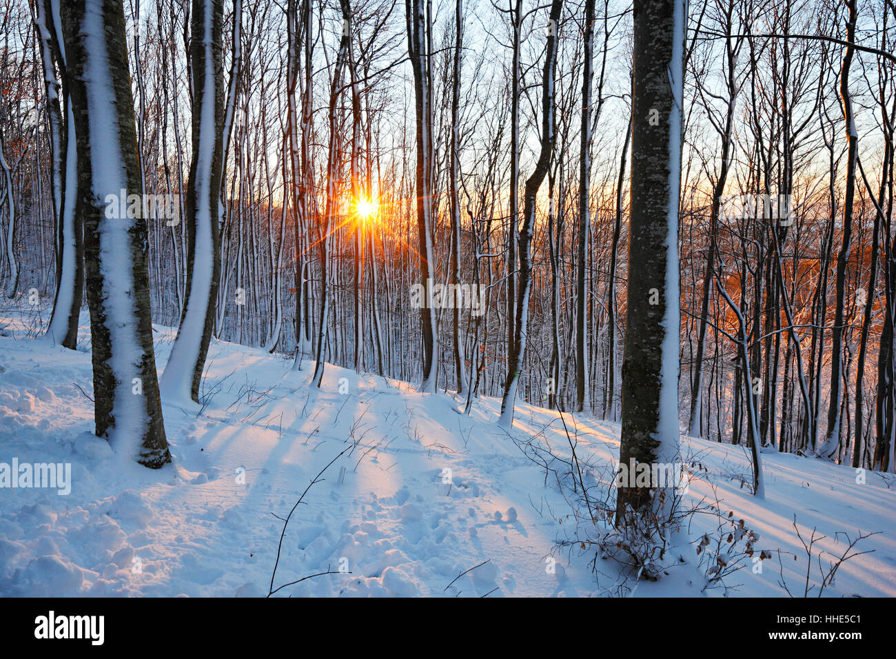 Sun in snow cowered forest Immagini Stock