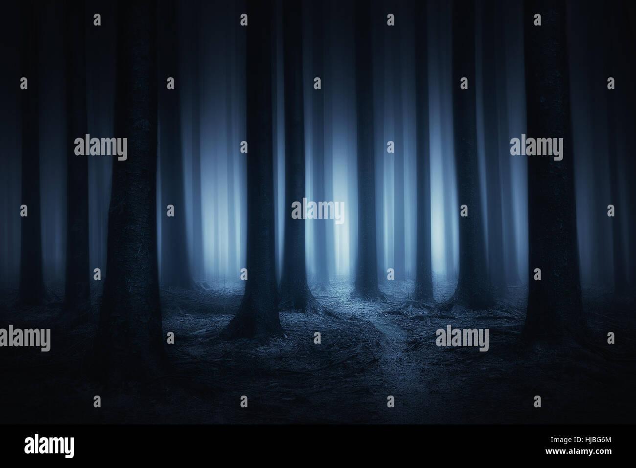 Scuro e spaventoso foresta a notte Immagini Stock