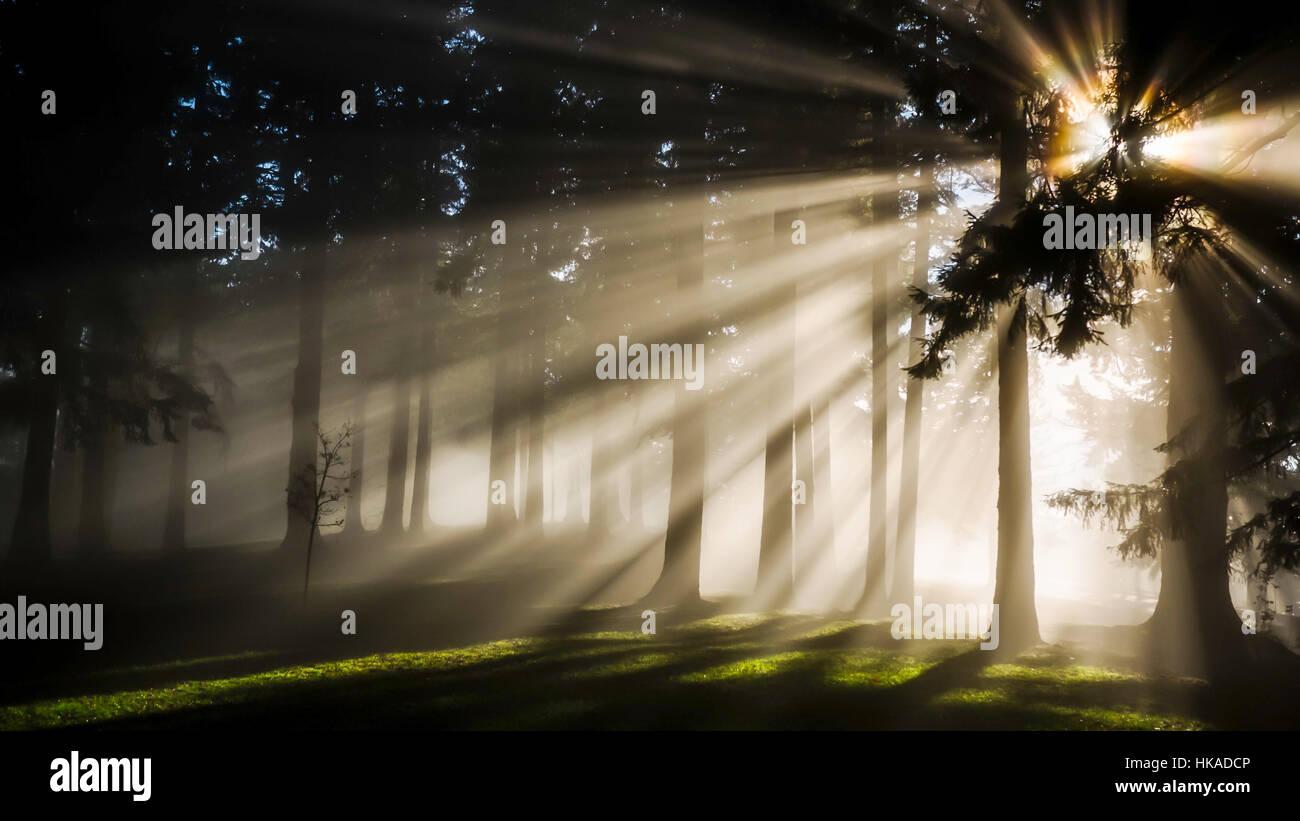 Super Cool effetto nella foresta Immagini Stock