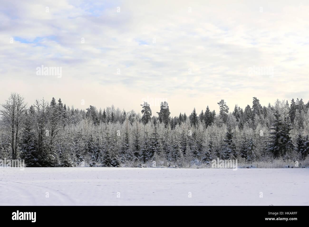Incantevole paesaggio invernale del cielo, foresta smerigliato e coperta di neve campo in sfumature pastello. Adatto Immagini Stock