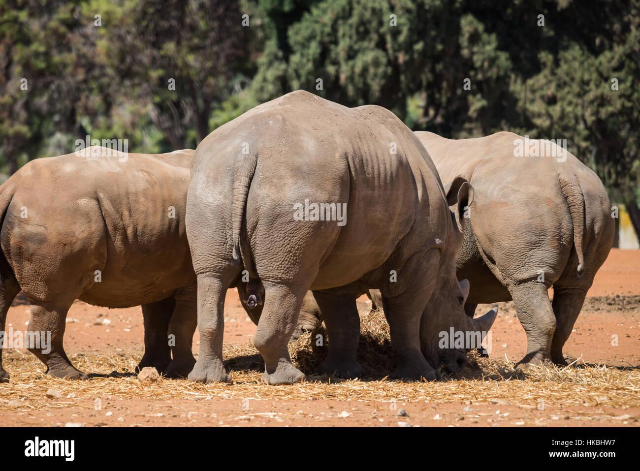 Visitare il sito web di Safari Ramat Gan, Israele Immagini Stock