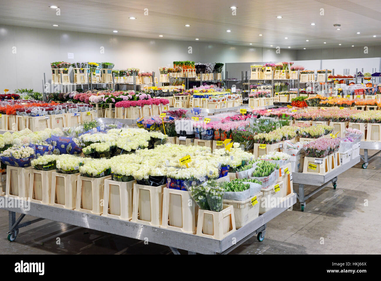 Grande negozio di fiori con molte luci sul soffitto e cesti di varie