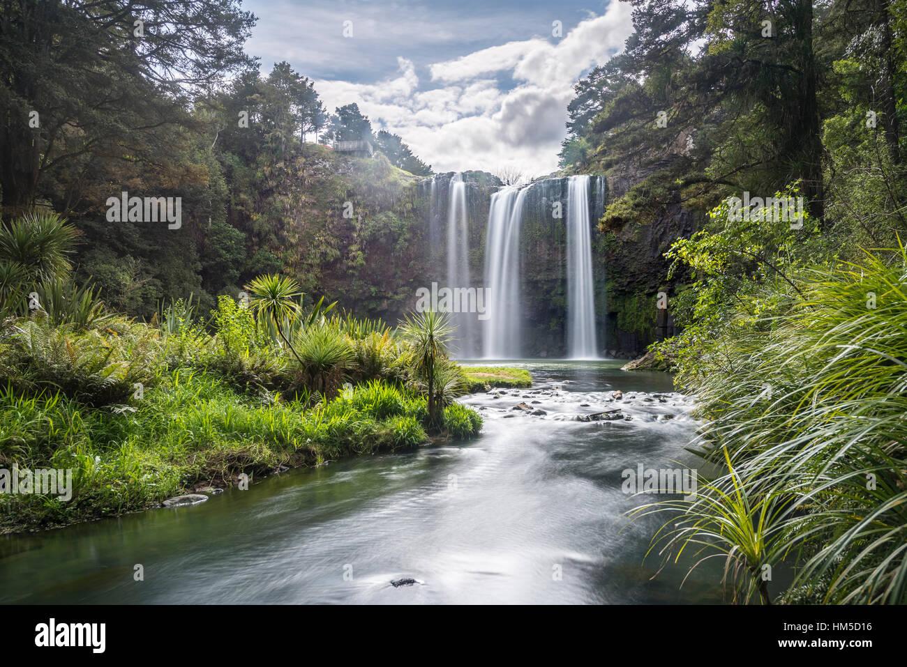 Whangarei cascata, foreste pluviali temperate, Whangarei, Northland e North Island, Nuova Zelanda Immagini Stock