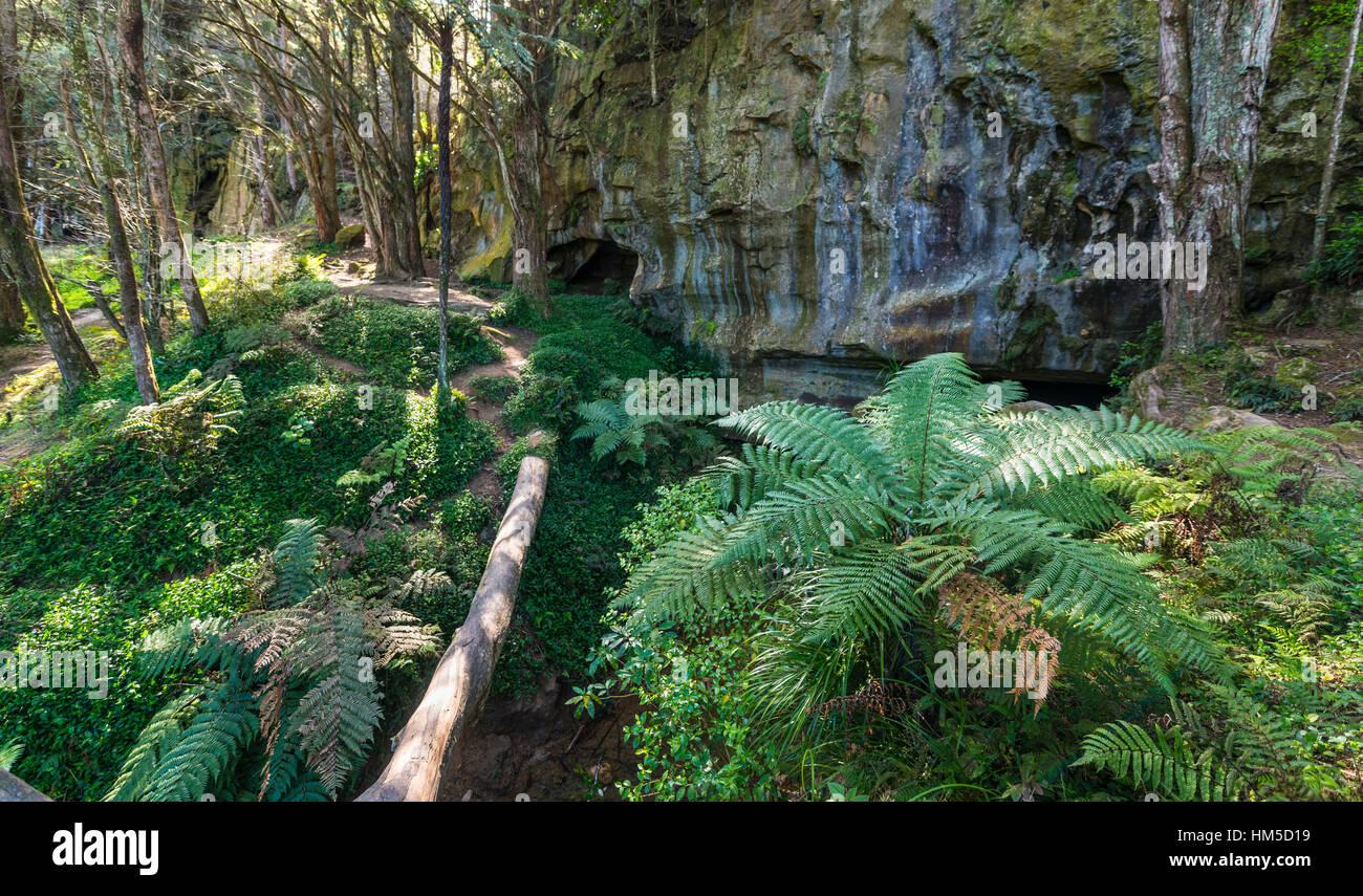 Foresta di felci, ingresso alle grotte di Waipu, Northland e North Island, Nuova Zelanda Immagini Stock
