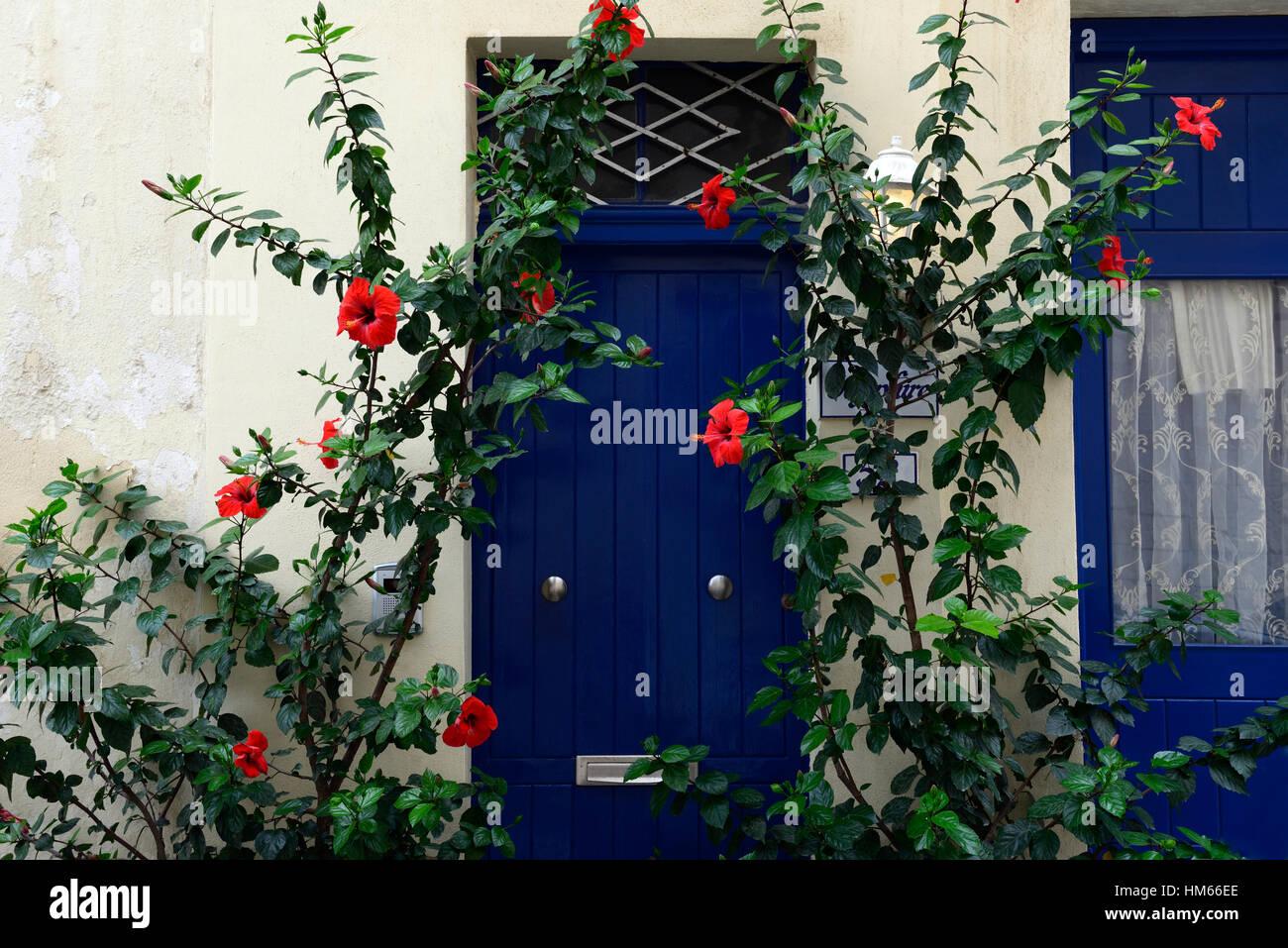 Red hibiscus fiore fiori fioritura porta blu colore colore combinazione giardino mediterraneo giardinaggio floreale Immagini Stock