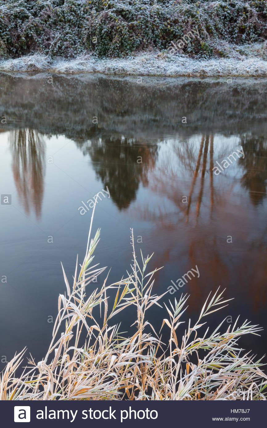 Linee di brina sulle rive del fiume Sammamish come fluisce attraverso Woodinville, Washington. Immagini Stock