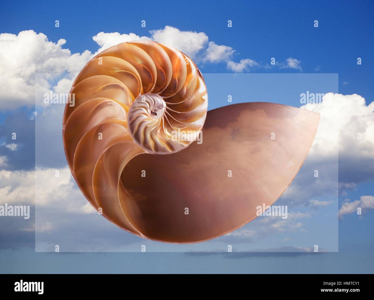 Generati digitalmente immagine del guscio con sky in background Immagini Stock