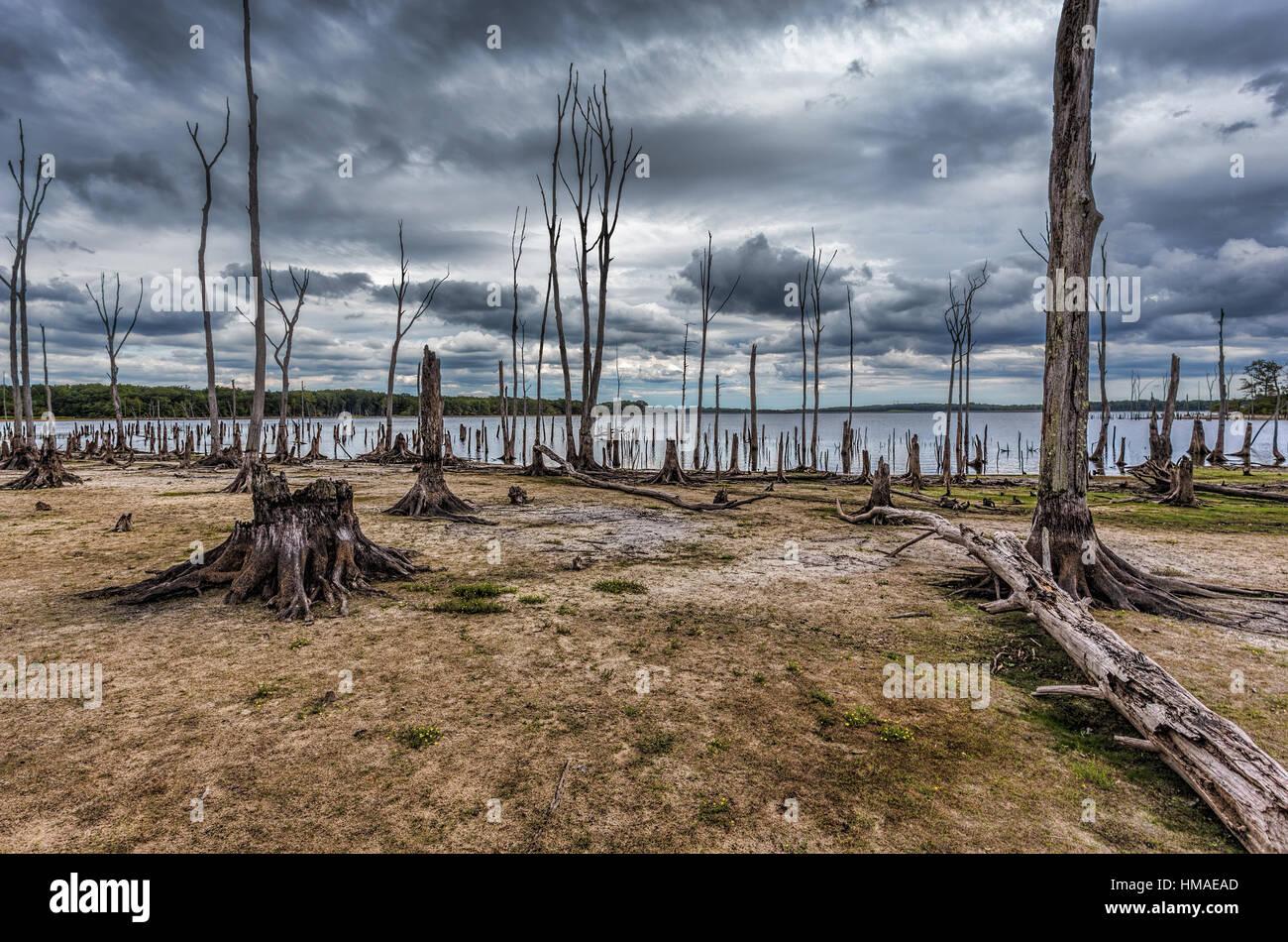 Gli alberi morti in foresta intorno ad un lago con bassi livelli di acqua. Questa foto mostra le condizioni di siccità Immagini Stock