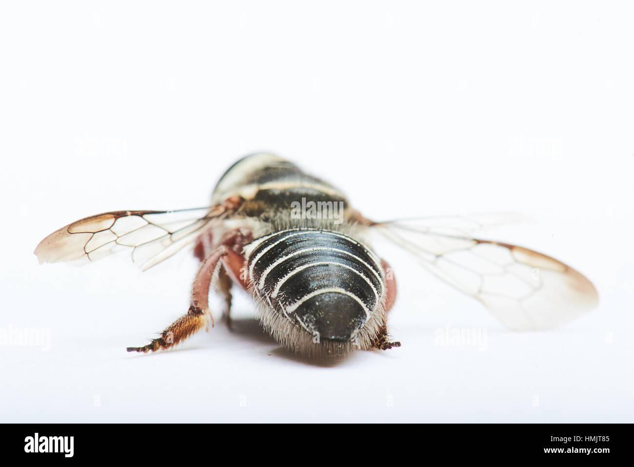 nero ape sesso posizione