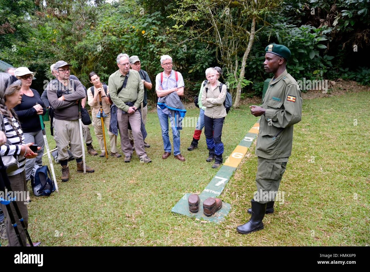 Guida per spiegare i 7 metri di distanza il regolamento regola per turisti, Foresta impenetrabile di Bwindi, Uganda, Immagini Stock