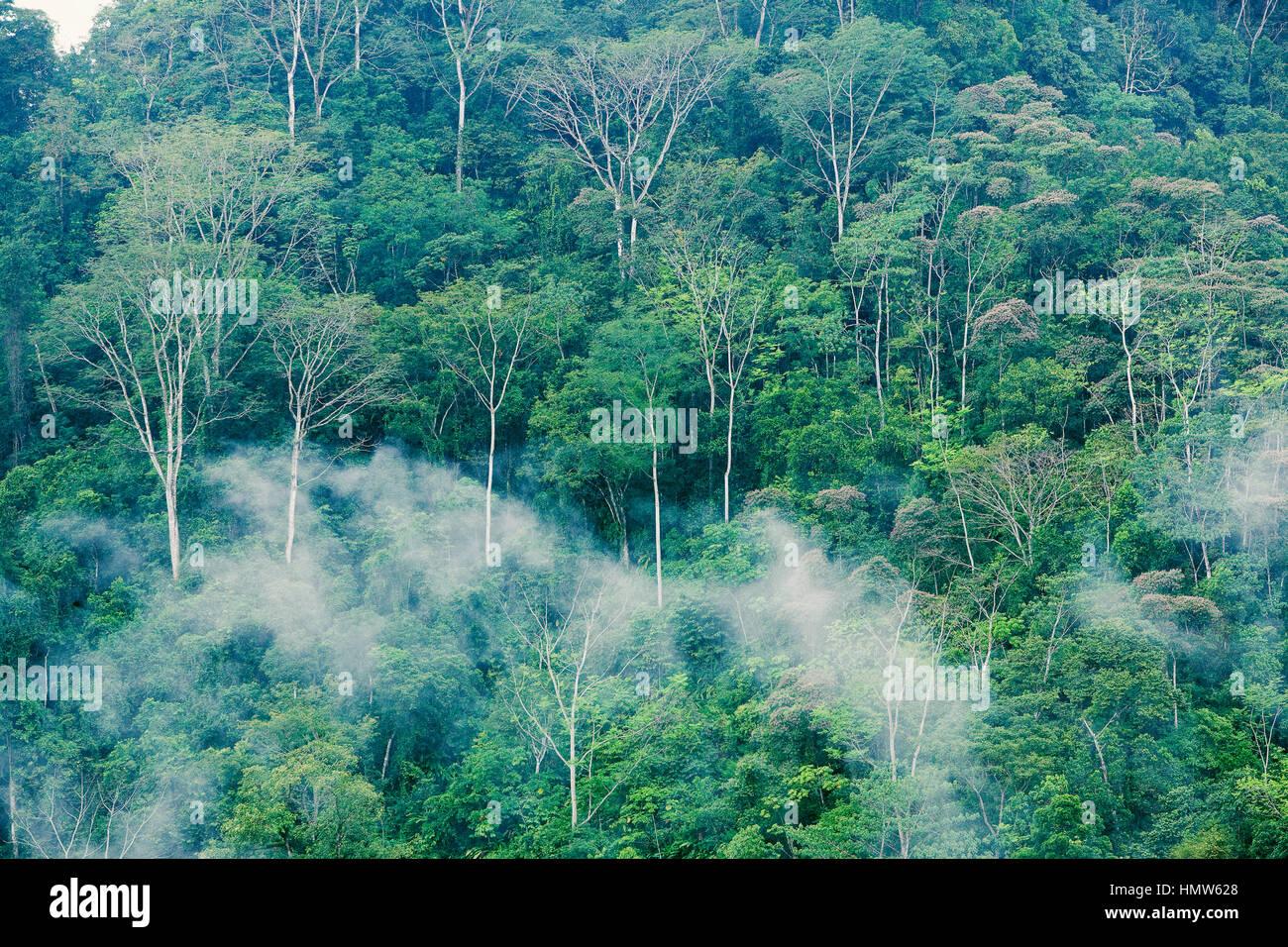 Foresta di pioggia con nebbia, il parco nazionale di Corcovado, Costa Rica Immagini Stock