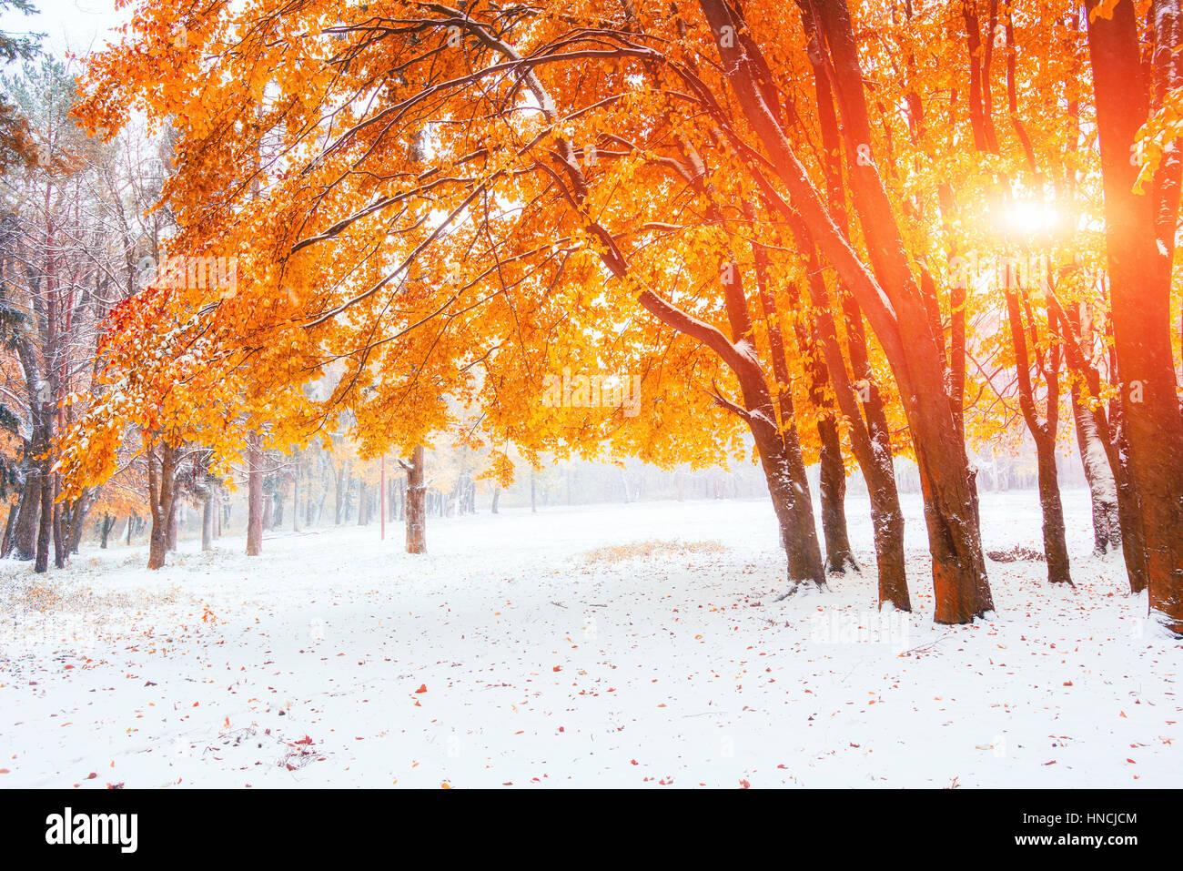 La luce del sole si rompe attraverso le foglie di autunno degli alberi in ea Immagini Stock