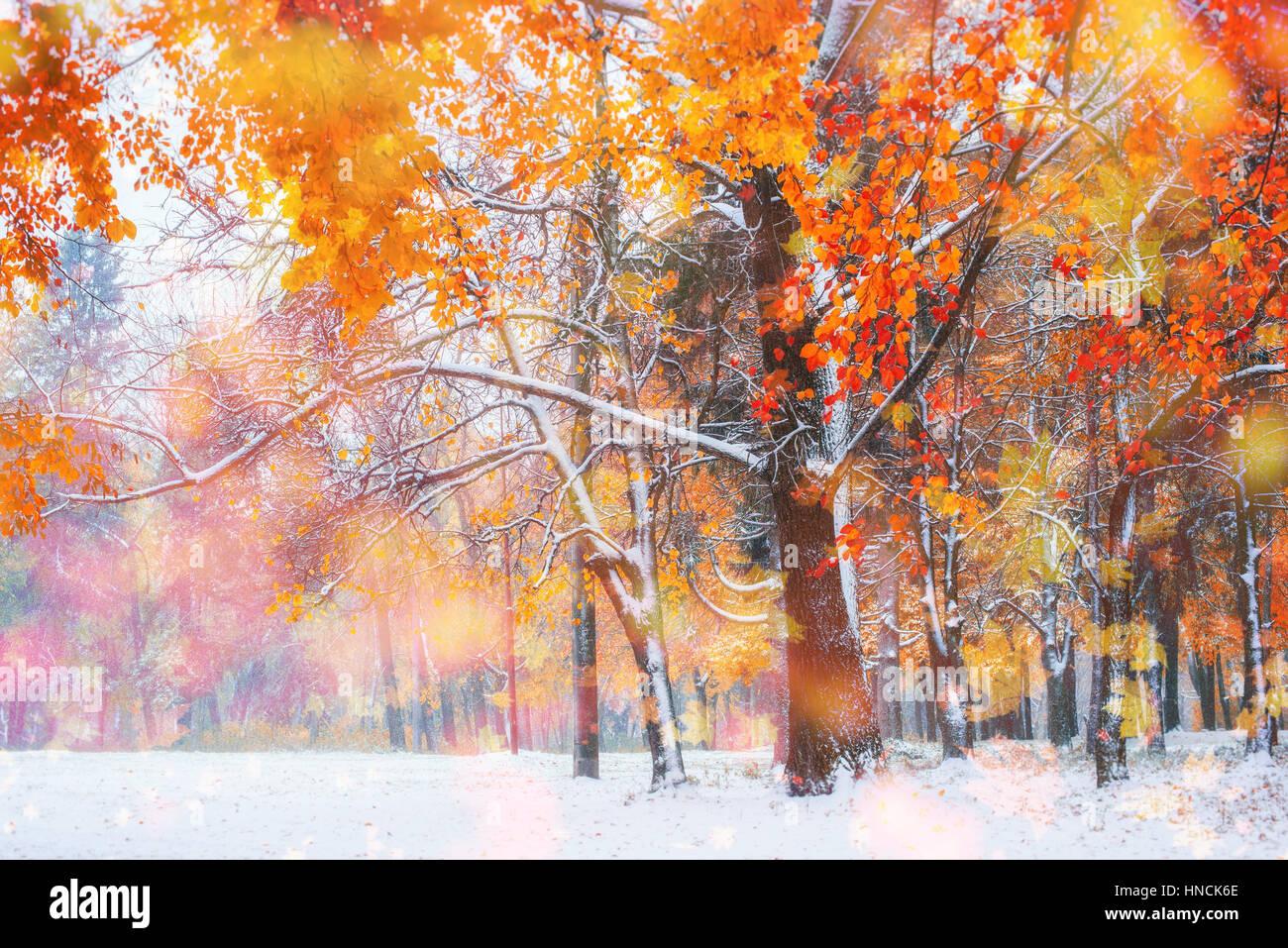 Ottobre mountain foresta di faggio con la prima neve invernale, Foto Stock