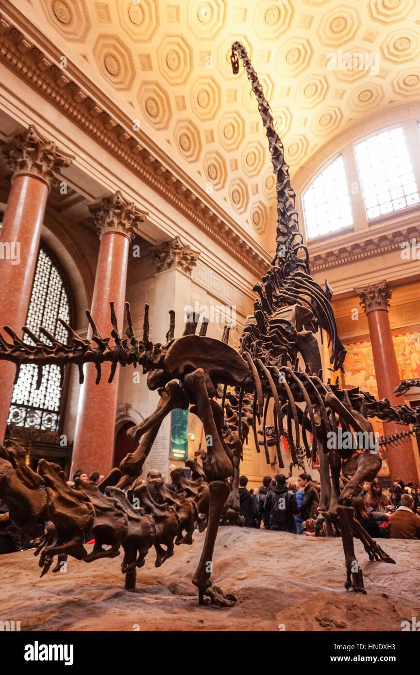 Museo Storia Naturale New York.Fossili Di Dinosauro Nella Hall Del Museo Americano Di Storia