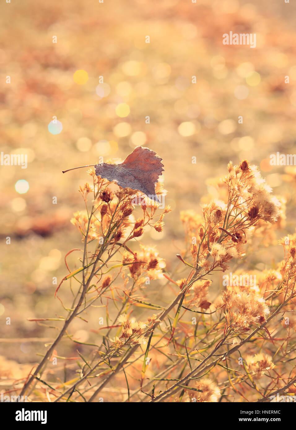 Un singolo, frost-refilato golden leaf poggia su fiori secchi contro un oro scintillanti sullo sfondo. È autunnale Immagini Stock